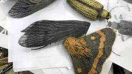Pia Hentusen Art Ii Biennaaliin tuleva teos nostaa esiin näkymättömiin jääviä hyönteisiä.