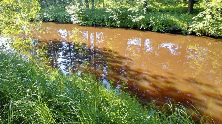 Kalimenjoki heinäkuussa 2019. Kuva: Markus Saari