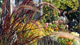 Pihan syystyöt on syytä tehdä huolella, jotta puutarha säilyy kauniina ja hyväkuntoisena.