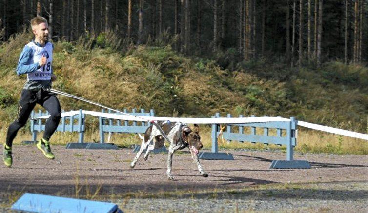Matti Laaksonen koiransa Roihun kanssa koirajuoksukisoissa. Roihu on perheen koirista nuorin ja menohaluja löytyy.