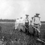 Heinäväki ylittää suota suoportaita pitkin vuonna 1913 Ylikiimingissä. Kuva: Museovirasto, kansantieteen kuvakokoelma, Samuli Paulaharjun kokoelma.