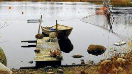 Valmisteilla olevassa Iijoen kalatalousalueen käyttö- ja hoitosuunnitelmassa haetaan ratkaisuja kalakantojen ja vesien parantamiseen. (Kuva: Tuija Järvelä-Uusitalo)