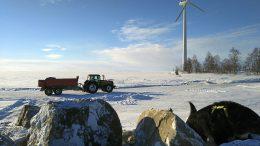 Iin kunnan vanhimmat tuulimyllyt sijaitsevat Vatungin tuulipuistossa. Voimalat ovat omistajansa, Leppäkosken Sähkön mukaan vielä hyvässä kunnossa. Haastavin paikka maarakenteiden osalta on ollut Kuivamatalan saari, jossa kuluvan vuoden helmikuussa korjattiin syysmyrskyjen särkemää laiturin suojakivetystä paikallisin voimin. Pakkasjaksoa ja paikallista jääosaamista hyödyntäen tehtiin jäätie kalasatamasta Kuivamatalan saareen. Kuvassa jäätietä rakentamassa on iiläinen Sauli Kehus. (Kuva: Leppäkosken Sähkö Oy)