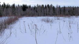 Viljelemättömäksi jäänyt pelto on metsitystukikelpoinen, jos vesakot pystyy poistamaan raivaussahatyönä, eikä sarkojen keskellä kasva kuin yksittäisiä pensasryhmiä. Kuvan pajukko voisi siis olla kookkaampaakin, ja alue olisi edelleen tukikelpoinen. Puulajeista ratkaisevat pajua enemmän koivu ja havupuut siinä vaiheessa, kun alueen puusto alkaa olla peittävämpää.