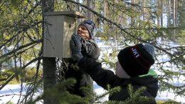 Matti Paakki ja Leevi Laitinen löysivät sopivan paikan linnunpöntölle ja laittoivat sen yhdessä tuumin kiinni odottamaan asukkaita. (Kuva: Teea Tunturi)