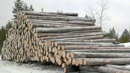 Sahatavarakauppa käy maailmanlaajuisesti kuumana, minkä seurauksena tukkivaltaiset leimikot ovat erittäin kysyttyjä, eivätkä tukkipinot ehdi pitkään teiden varsilla vanheta. Metsänomistajien kannattaakin olla tarkkoina ja kilpailuttaa puukaupat.