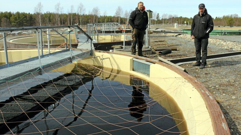 Voimalohi Oy:n tuotantopäällikkö Vesa Rahikkala ja toimitusjohtaja Aki Mäki-Petäys kertovat, että Raasakan kalanviljelylaitokselle on suunnitelmissa rakentaa kaksi uutta kalojen vapautusallasta.