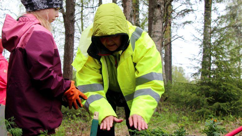 Eskarilainen Seela Kokko ja talkoolainen Taina Mäntykenttä istuttivat kasveja yhdessä Vesalan yhteisöllisen puutarhan avajaisissa. Osa taimista on päiväkotilaisten ja oppilaiden itsensä kasvattamia, osa on saatu muun muassa kyläläisiltä lahjoituksina. (Kuva: Teea Tunturi)