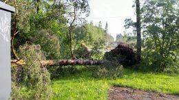 Viime viikon myrskyt ovat aiheuttaneet huolia metsänomistajille.