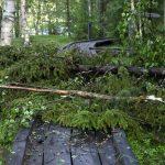 Koitelissa puita oli kaatunut myös pitkospuiden päälle.