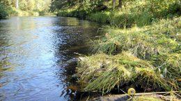 Iijoen ensimmäisen vesaisahan paikka Martimo-oja. Kuva: Jarmo Alasiurua
