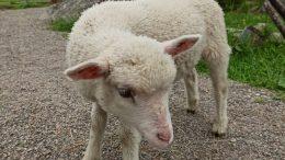 Kotieläinpuisto Arkadiassa pääsee näkemään eläimiä lähietäisyydeltä.
