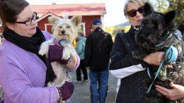 Eeva Pöyskö ja Ninja (vas.) sekä Hilkka Lehtonen ja Ransu viihtyivät Koljun syysmarkkinoilla. Pöyskö on Halosenniemen uusia asukkaita ja Ninja vielä uudempi tulokas, rescue-koira Espanjasta. Lehtonen oli kyläilemässä Halosenniemessä.