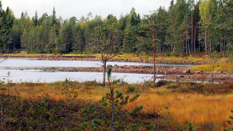 Vedenpinta on Keskimmäisessä Pihlajajärvessä laskenut liki metrin normaalia alemmas munkin vuotamisen takia.