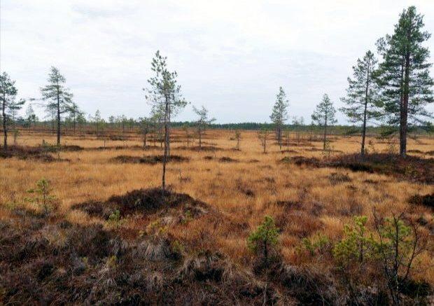 Viinivaarasta, jossa Oulun kaupungilla on vedenottosuunnitelmia, on otettu suojeluun uusia soita. Suojelu saattaa lisätä alueen arvoa ja antaa Oululle syytä arvioida soiden, kuten kuvassa näkyvän Leppisuon ja alueen vesistöjen merkitystä.